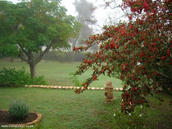 Misty morn at Dempsey's Guest House.