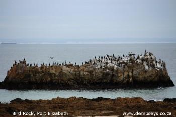 Coastal birdlife at Bird Rock, Port Elizabeth